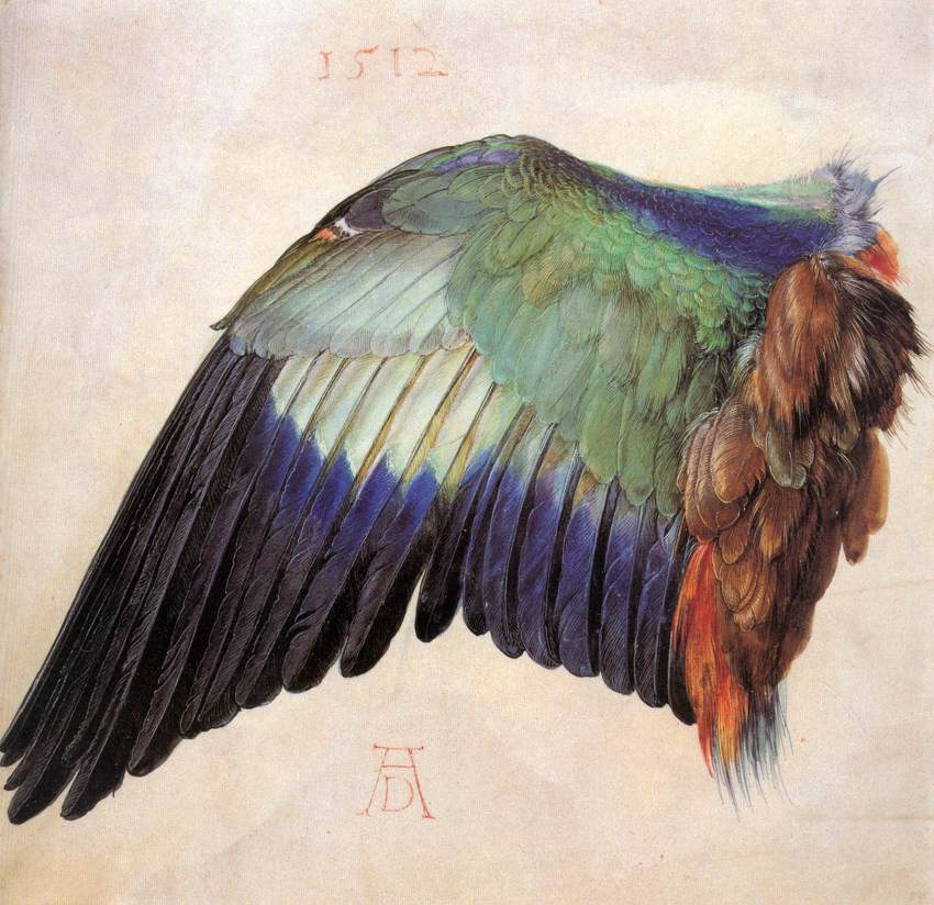 Wing of a Roller, Albrecht Dürer, 1512, watercolor and gouache on vellum