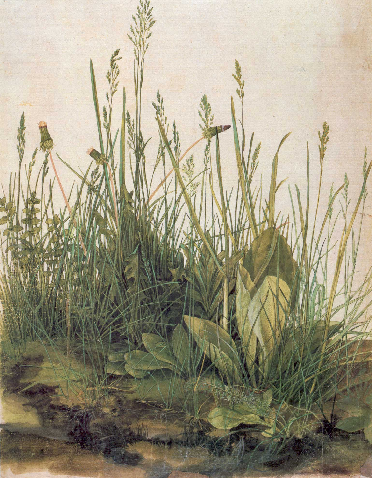 Albrecht Dürer, Great Piece of Turf, 1503, watercolor