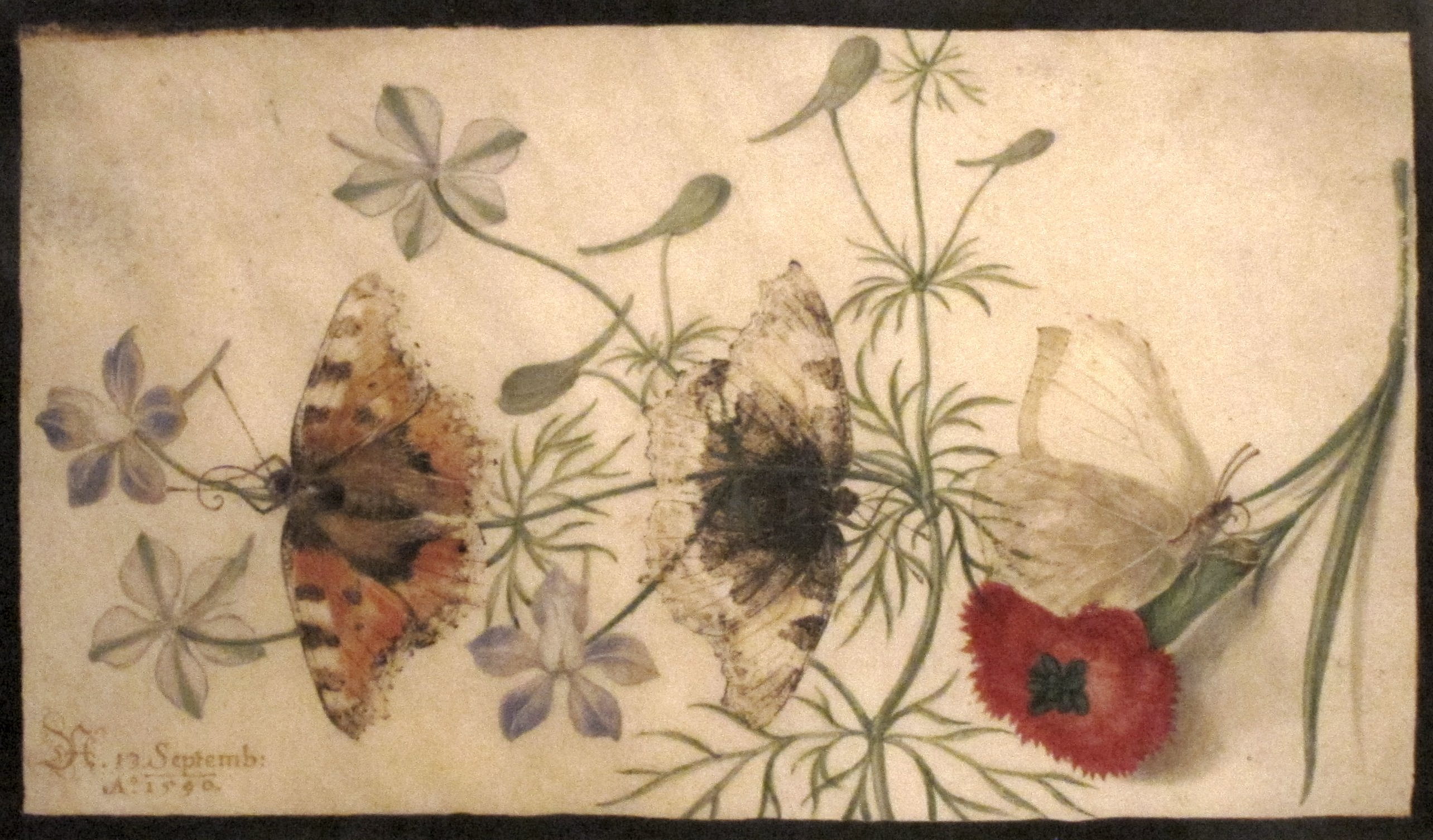 History of watercolor art - Joris Hoefnagel Studies Of Flowers And Butterflies Watercolor On Parchment 1590