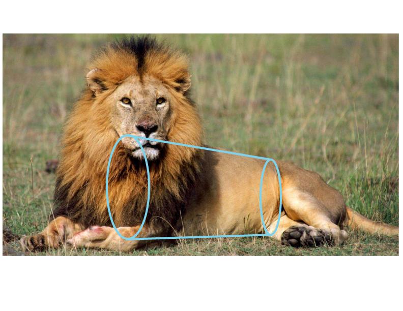 Lion_Geometry_1B