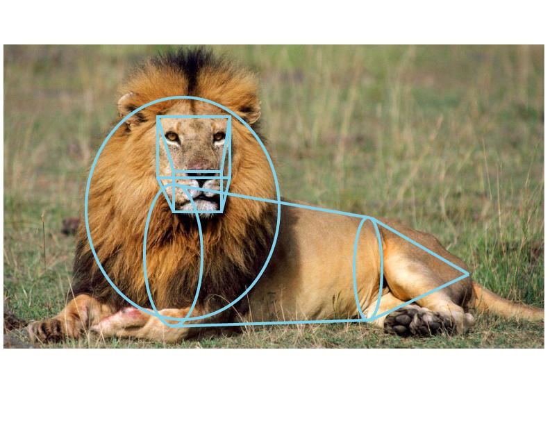 Lion_Geometry_2B