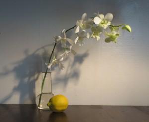 Orchid-lemon-1
