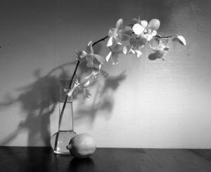 Orchid-lemon-1 BW