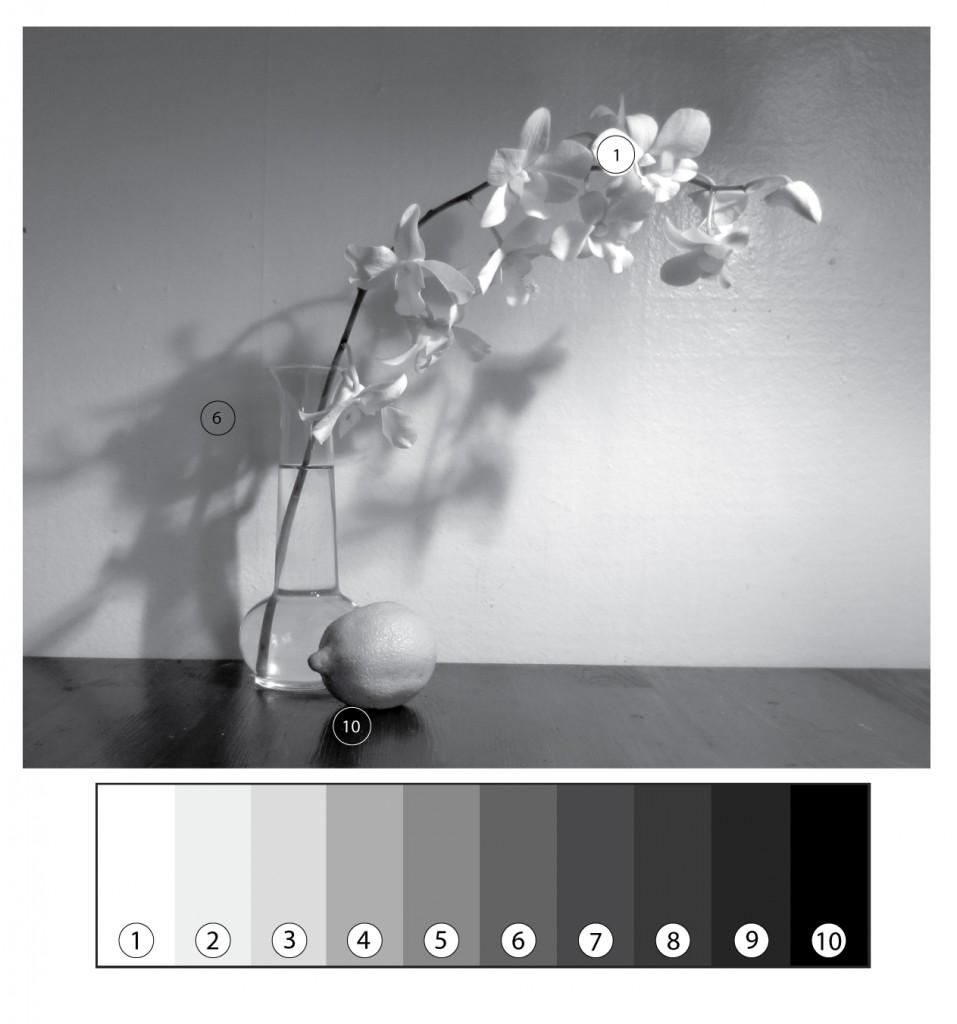 Orchid-lemon-1-BW-value-scale