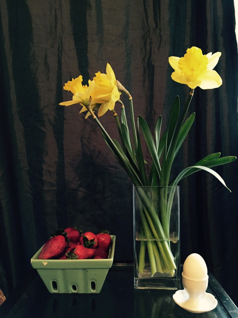 daffodil still life 2