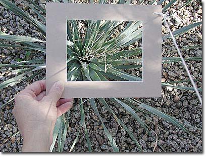 viewfinder plant