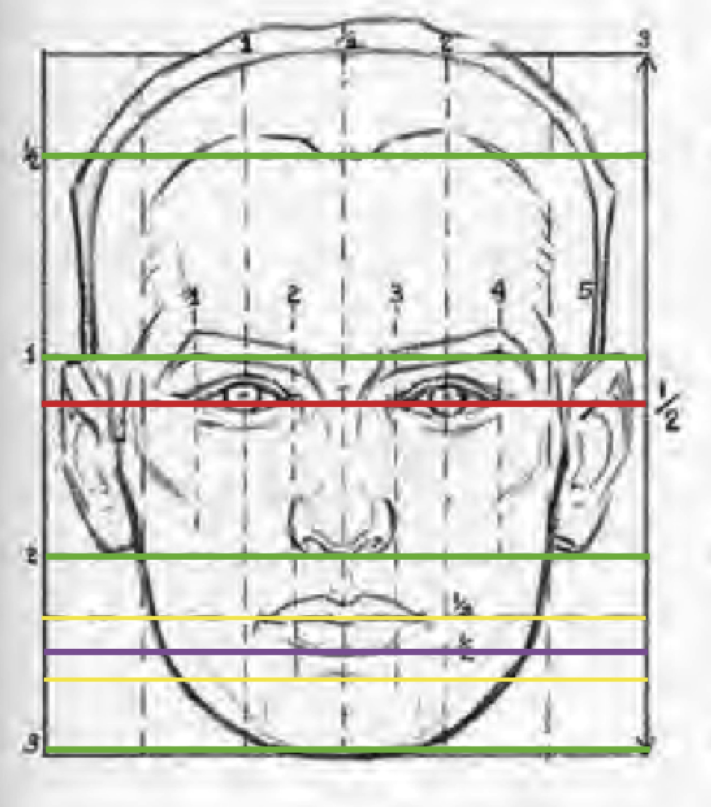 Drawing With Horizontal Lines : Facial proportions and sculpting a face beginner s school