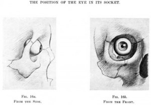 eyeball in socket