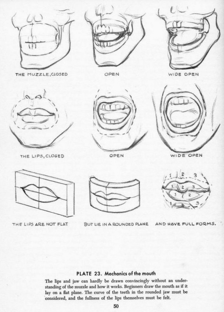 mechanics of the mouth