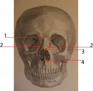 skull arrows