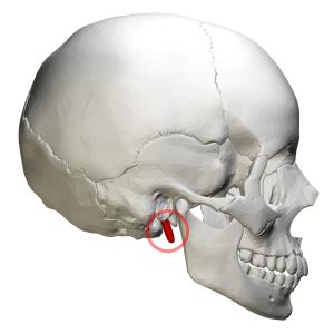 styloid process foramen magnum