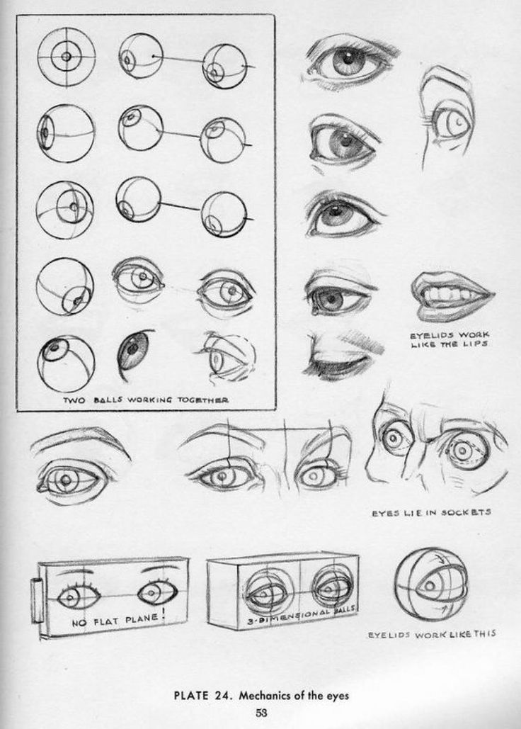 This is a photo of Slobbery Eye Injury Drawing References